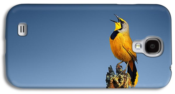 Small Photographs Galaxy S4 Cases - Bokmakierie bird calling Galaxy S4 Case by Johan Swanepoel