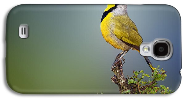 Bokmakierie Bird - Telophorus Zeylonus Galaxy S4 Case by Johan Swanepoel