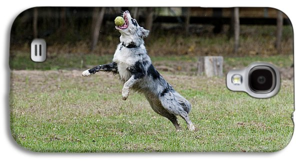 Border Collie Catching A Ball Galaxy S4 Case by William H. Mullins