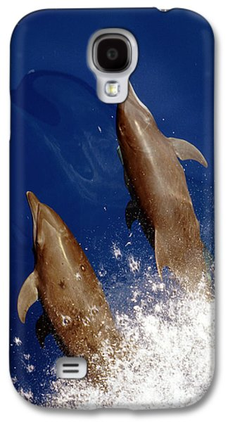 Bottlenose Dolphins Tursiops Truncatus Galaxy S4 Case by Anonymous