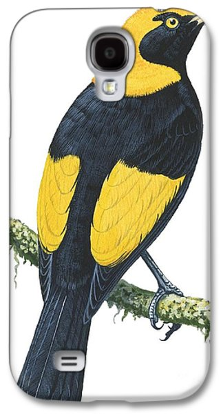 Feather Drawings Galaxy S4 Cases - Bowerbird  Galaxy S4 Case by Anonymous