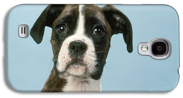 Boxer Galaxy S4 Cases - Boxer Dog, Close-up Of Head Galaxy S4 Case by John Daniels