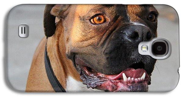 Boxer Galaxy S4 Cases - Boxer Fun Galaxy S4 Case by Christina Kulzer