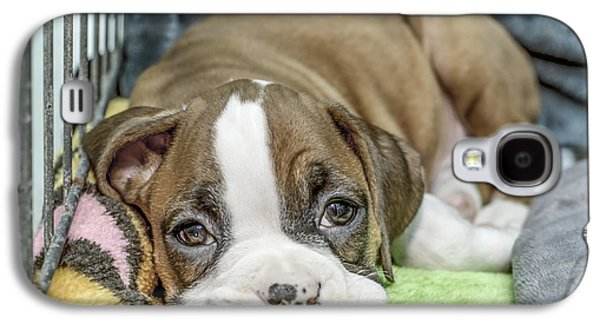Boxer Puppy Among Toys Galaxy S4 Case by Tony Moran