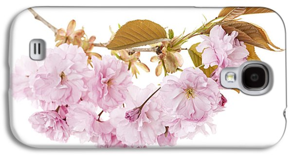 Cherry Blossoms Photographs Galaxy S4 Cases - Branch with cherry blossoms Galaxy S4 Case by Elena Elisseeva