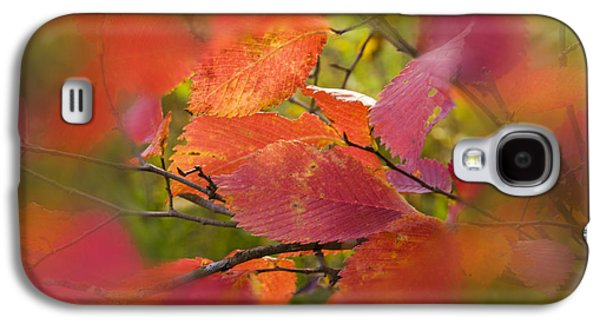 Contemporary Glass Galaxy S4 Cases - Bright autumn leaves Galaxy S4 Case by   larisa Fedotova