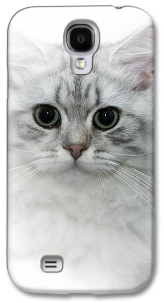 Breed Digital Galaxy S4 Cases - British Longhair Cat Time Goes By Galaxy S4 Case by Melanie Viola