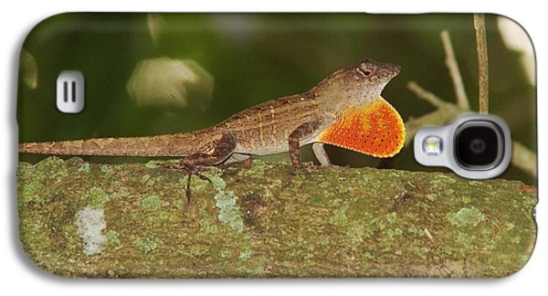Brown Anole Splendor Galaxy S4 Case by Lynda Dawson-Youngclaus