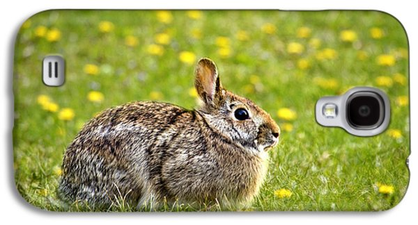 House Pet Galaxy S4 Cases - Brown Bunny in Green Grass Galaxy S4 Case by Christina Rollo