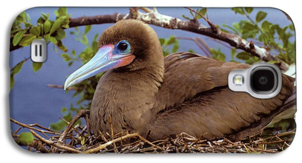 Brown Color Morph Of Red-footed Booby Galaxy S4 Case by Thomas Wiewandt