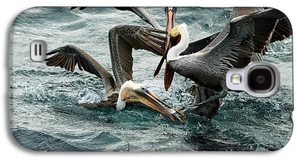 Brown Pelicans Stealing Food Galaxy S4 Case by Christopher Swann