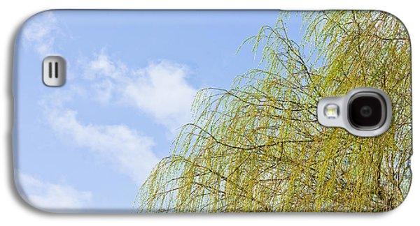 Budding Willow Galaxy S4 Case by Tom Gowanlock