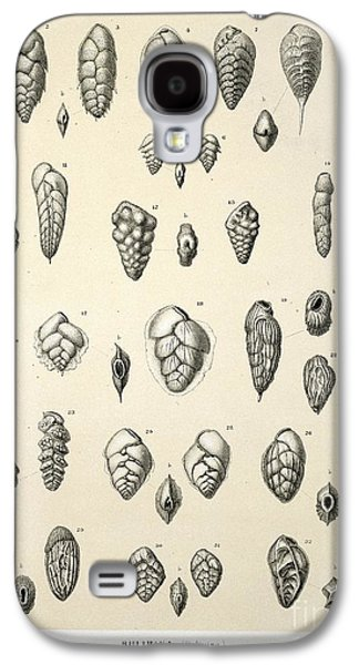 Plankton Galaxy S4 Cases - Bulimina Foraminifera, Hms Challenger Galaxy S4 Case by Natural History Museum, London
