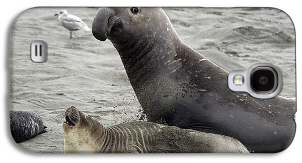 Ocean Mammals Galaxy S4 Cases - Bull Approaches Cow Seal Galaxy S4 Case by Mark Newman