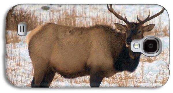 Oak Creek Galaxy S4 Cases - Bull Elk  Galaxy S4 Case by Jeff  Swan
