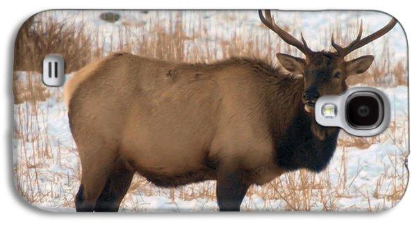 Oak Creek Photographs Galaxy S4 Cases - Bull Elk  Galaxy S4 Case by Jeff  Swan