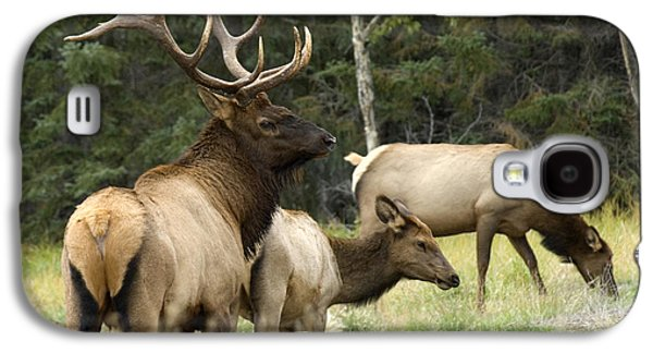 Harem Photographs Galaxy S4 Cases - Bull Elk With His Harem Galaxy S4 Case by Bob Christopher