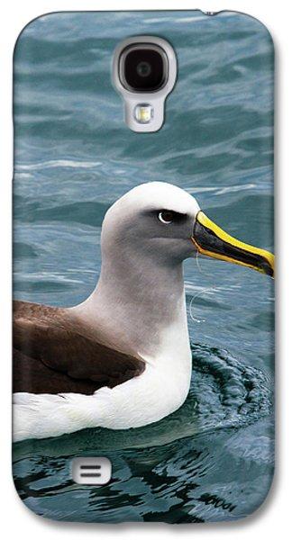 Buller's Albatross (thalassarche Bulleri Galaxy S4 Case by Micah Wright