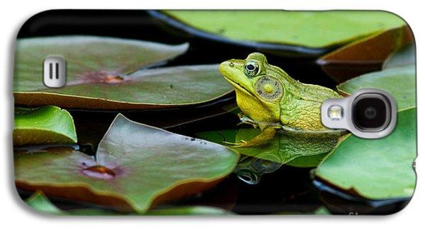 Anurans Galaxy S4 Cases - Bullfrog Galaxy S4 Case by Jim Zipp