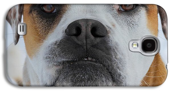 Boxer Pyrography Galaxy S4 Cases - Bully Face by Bridget Havercroft Galaxy S4 Case by Bridget Havercroft