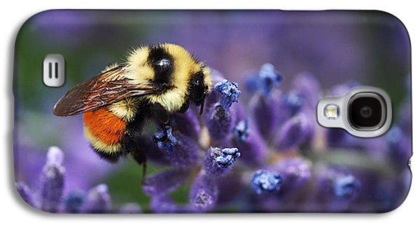 Bumblebee On Lavender Galaxy S4 Case by Rona Black
