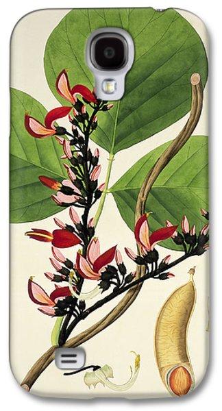 Flora Drawings Galaxy S4 Cases - Butea Superba Galaxy S4 Case by William Roxburgh
