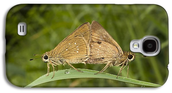 Butterfly Prey Galaxy S4 Cases - Butterfly Chestnut Bob Iambrix salsala mating Galaxy S4 Case by Rudra Narayan  Mitra