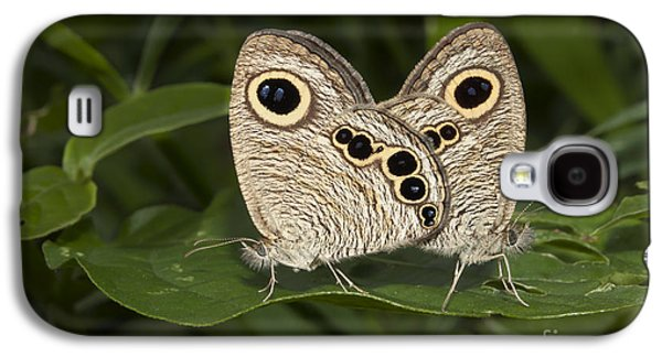 Butterfly Prey Galaxy S4 Cases - Butterfly common five ring Ypthima baldus mating Galaxy S4 Case by Rudra Narayan  Mitra
