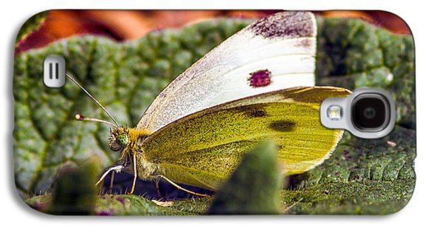 Macro Tapestries - Textiles Galaxy S4 Cases - Butterfly Galaxy S4 Case by Dennis Bucklin