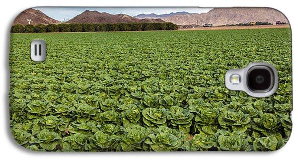 Romaine Galaxy S4 Cases - Butterhead Lettuce Farm Galaxy S4 Case by Robert Bales