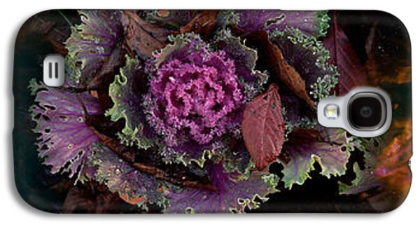 Concept Photographs Galaxy S4 Cases - Cabbage With Butterfly Nebula Galaxy S4 Case by Panoramic Images