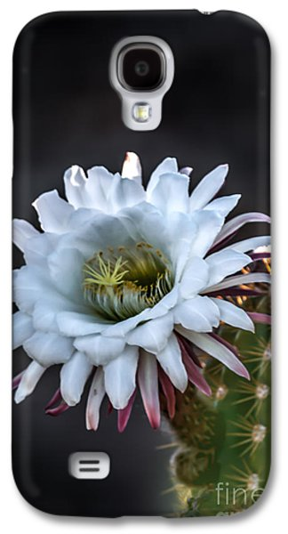 Haybale Galaxy S4 Cases - Cactus Beauty Galaxy S4 Case by Robert Bales