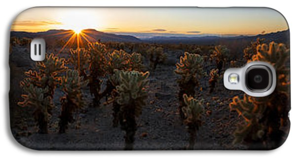 Sun Galaxy S4 Cases - Cactus Forest Galaxy S4 Case by Chad Dutson