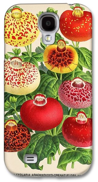 Business Drawings Galaxy S4 Cases - Calceolaria from a vintage Belgian book of flora. Galaxy S4 Case by Philip Ralley