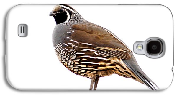 Haybale Galaxy S4 Cases - California Quail Galaxy S4 Case by Robert Bales