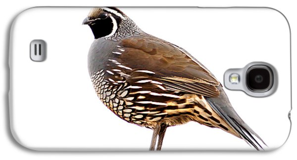 Recently Sold -  - Haybale Galaxy S4 Cases - California Quail Galaxy S4 Case by Robert Bales