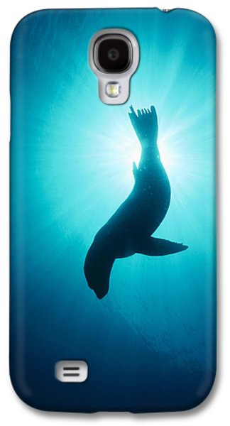 California Sea Lions Galaxy S4 Cases - California Sea Lion  Channel Islands Np Galaxy S4 Case by Flip Nicklin
