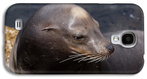 California Sea Lions Galaxy S4 Cases - California Sea Lion Galaxy S4 Case by John Daly