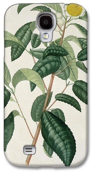 Genus Galaxy S4 Cases - Camellia Thea Galaxy S4 Case by LFJ Hoquart