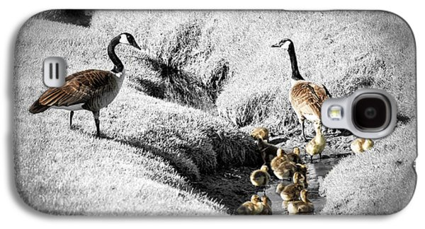 Family Walks Galaxy S4 Cases - Canada geese family Galaxy S4 Case by Elena Elisseeva