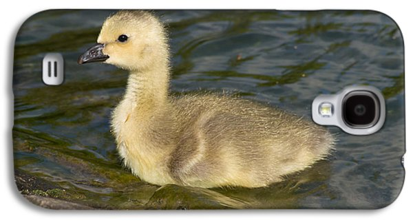Fauna Photographs Galaxy S4 Cases - Canada Goose Gosling Galaxy S4 Case by Robert Carr