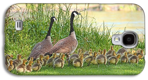Baby Bird Photographs Galaxy S4 Cases - Canadian Geese Family Galaxy S4 Case by Jennie Marie Schell