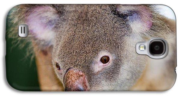 Captive Koala Bear Galaxy S4 Case by Ashley Cooper