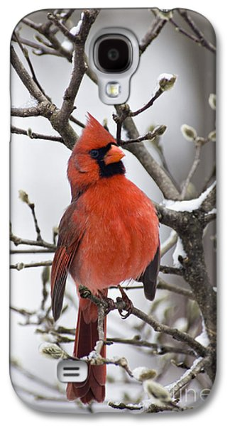 Indiana Winters Galaxy S4 Cases - Cardinal - D008410 Galaxy S4 Case by Daniel Dempster