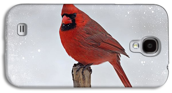Indiana Winters Galaxy S4 Cases - Cardinal Perching Galaxy S4 Case by Sandy Keeton