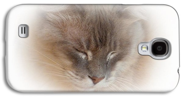 Contemplative Photographs Galaxy S4 Cases - Cat Nap Galaxy S4 Case by Connie Handscomb
