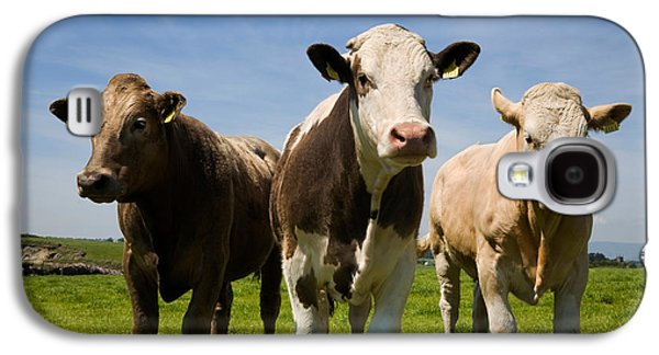 Farmscape Galaxy S4 Cases - Cattle, County Waterford, Ireland Galaxy S4 Case by Panoramic Images