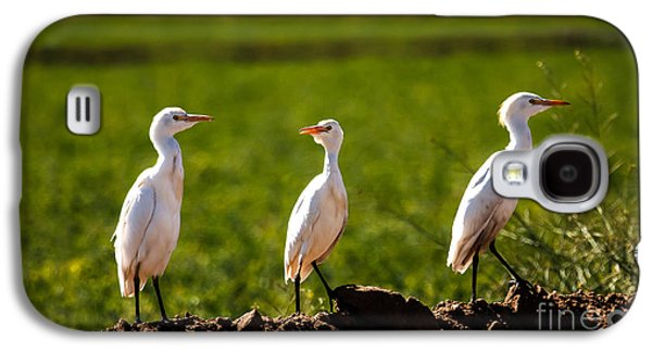 Haybale Galaxy S4 Cases - Cattle Egrets Galaxy S4 Case by Robert Bales