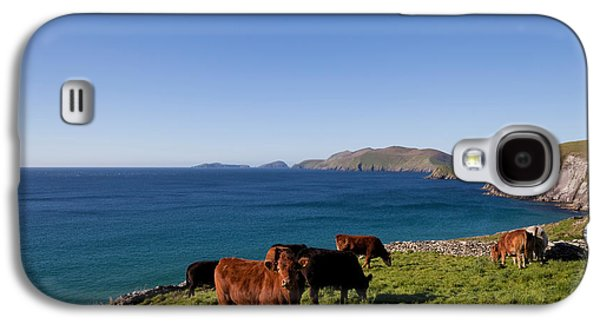 Farmscape Galaxy S4 Cases - Cattle With Distant Blasket Islands Galaxy S4 Case by Panoramic Images