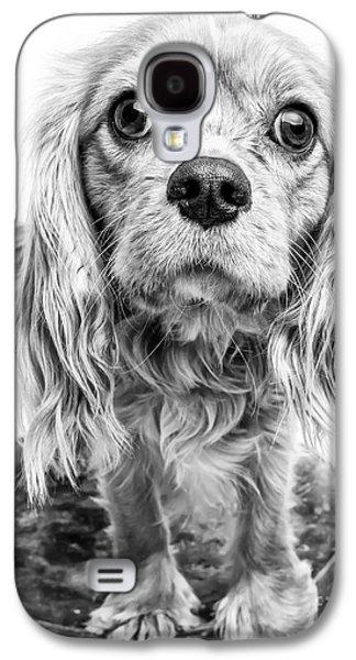 Studio Photographs Galaxy S4 Cases - Cavalier King Charles Spaniel Puppy Dog Portrait Galaxy S4 Case by Edward Fielding